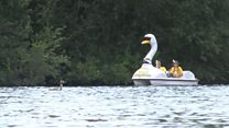 Swan pedalo makes 125-mile trip on Thames