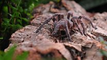 Can you name this spider?