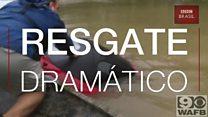 Americana escapa com cachorro de carro afundando em enchente em salvamento dramático