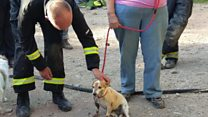 Firefighters rescue Lilly the Jack Russell