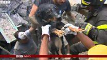 がれき下からペット犬も救助 イタリア中部地震