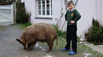 How a pig transformed my autistic son's life