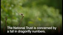 Concern about dragonfly numbers
