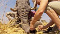 How to put an elephant to sleep