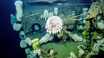 Asombrosas imágenes submarinas de un barco de la II Guerra Mundial hundido hace más de 60 años