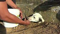 Спасение собаки в Перу