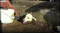 身動きできない犬のニッキを救出 ペルー