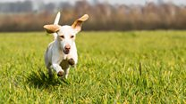 Owners should check their dog 'everyday' for ticks