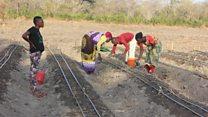 Vijana wanavyotumia ardhi kuimarisha kilimo Tanzania