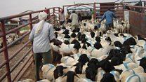 Gaadiidleyda Somaliland iyo xilliga carafada