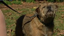 Who's in the lead? Meet Westminster top dogs