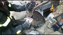 Kedi Pietro 16 gün sonra enkazdan çıkartıldı