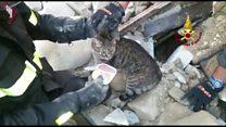 Gato é resgatado de escrombros 16 dias após terremoto na Itália; assista