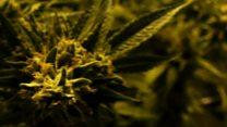 Britaniya: deputatlar marixuananın leqallaşdırılmasına çağırırlar