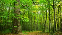 How do trees communicate?