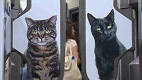 La estación de metro de Londres invadida por centenares de gatos