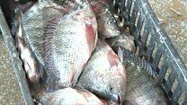 Zambie : la pêche est en danger