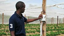 Kenya's mobile-controlled greenhouses