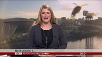 'Giant' wasp invades Breakfast news