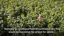 Farmer hopes to not reap what he has sown