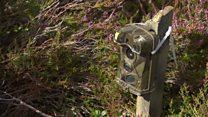 Hen harrier nest study reveals findings
