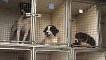 Dogs at the Ballymena Dogs Trust Rehoming Centre.