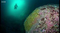 Dive into the sea life of St Kilda