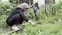 Refugees plant roots in Austrian gardens