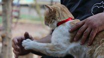Halep'in terk edilen kedilerine bakan adam