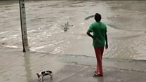 Woman, dog, crocodile...