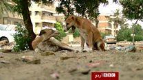 کراچی میں کتوں کے بچاؤ کی  مہم