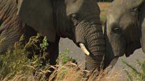 توافقی تاریخی برای نجات جان فیل ها در نشست ژوهانسبورگ