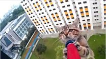 High rise feline rescue drama