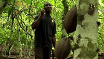 Farming threatens forests in Ivory Coast