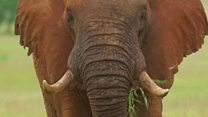 How should we protect endangered species?