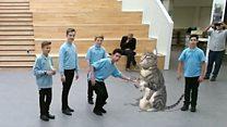 В английской школе появилась виртуальная кошка