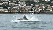 Dolphin pictured killing porpoise by flipping it into air