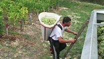 Celebrating the French grape harvest