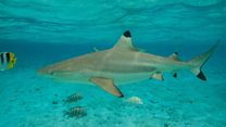 Man survives 28 hours in shark waters