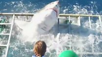 Shark smashes into cage on dive trip