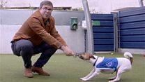 #londonблог: приют для бездомных собак и кошек