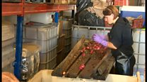 Wiltshire couple's runaway success as cider makers