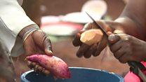 Aina mpya ya viazi vitamu kutoka Uganda