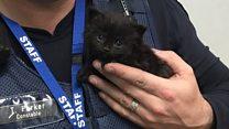 Kitten rescued from Australia fire