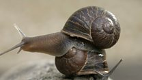 Find Jeremy the 'lefty' snail a mate