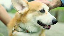 ماجرای سگی که واقواقش ترجمه میشود