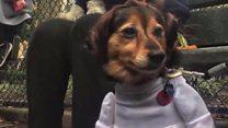 Fofos ou assustadores? Concurso premia melhor fantasia canina para Dia das Bruxas