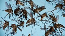 Big funding for radical anti-Zika programme