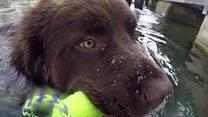 Aprende inglés: Yoda, el perro que te puede salvar la vida