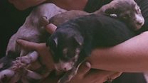 Puppies rescued from IS tunnel
